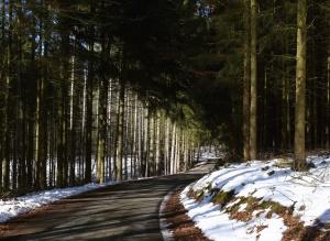 Straße, Wald, Winter, Schnee, Asphalt, Holz