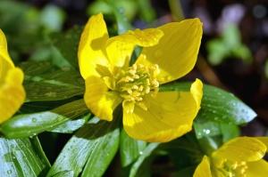 Blume, blütenblätter, pistil, garten, natur, blatt