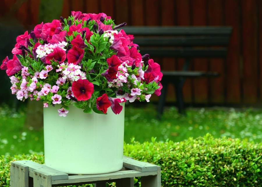 bucket, flower, grass, bloom, bench, garden