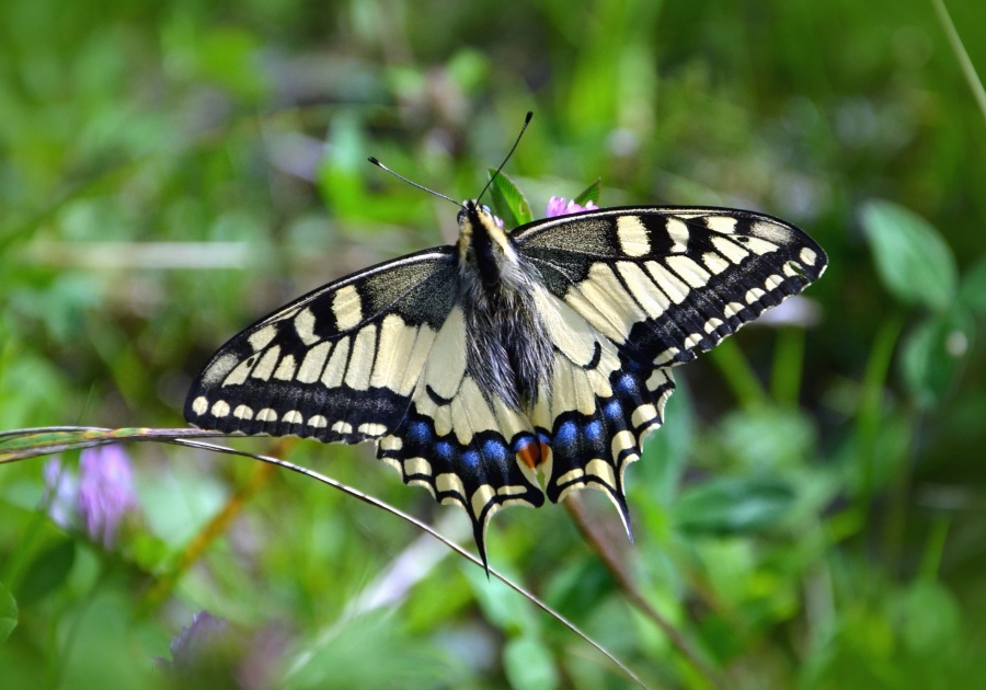 butterfly, plant, color, colorful, insect