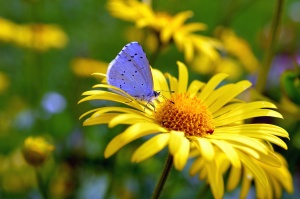 color, colorful, nature, butterfly, flower, plant