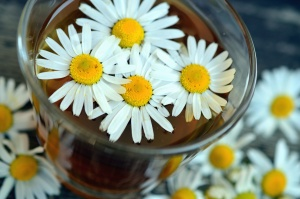 daisy, water, glass, flower, plant