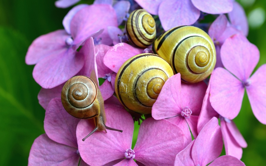 snail, flower, petal, nature, garden