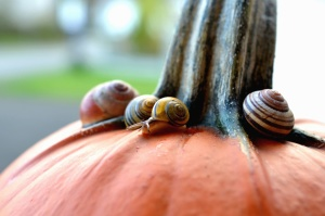 peduncle, pumpkin, snail, invertebrate, vegetable