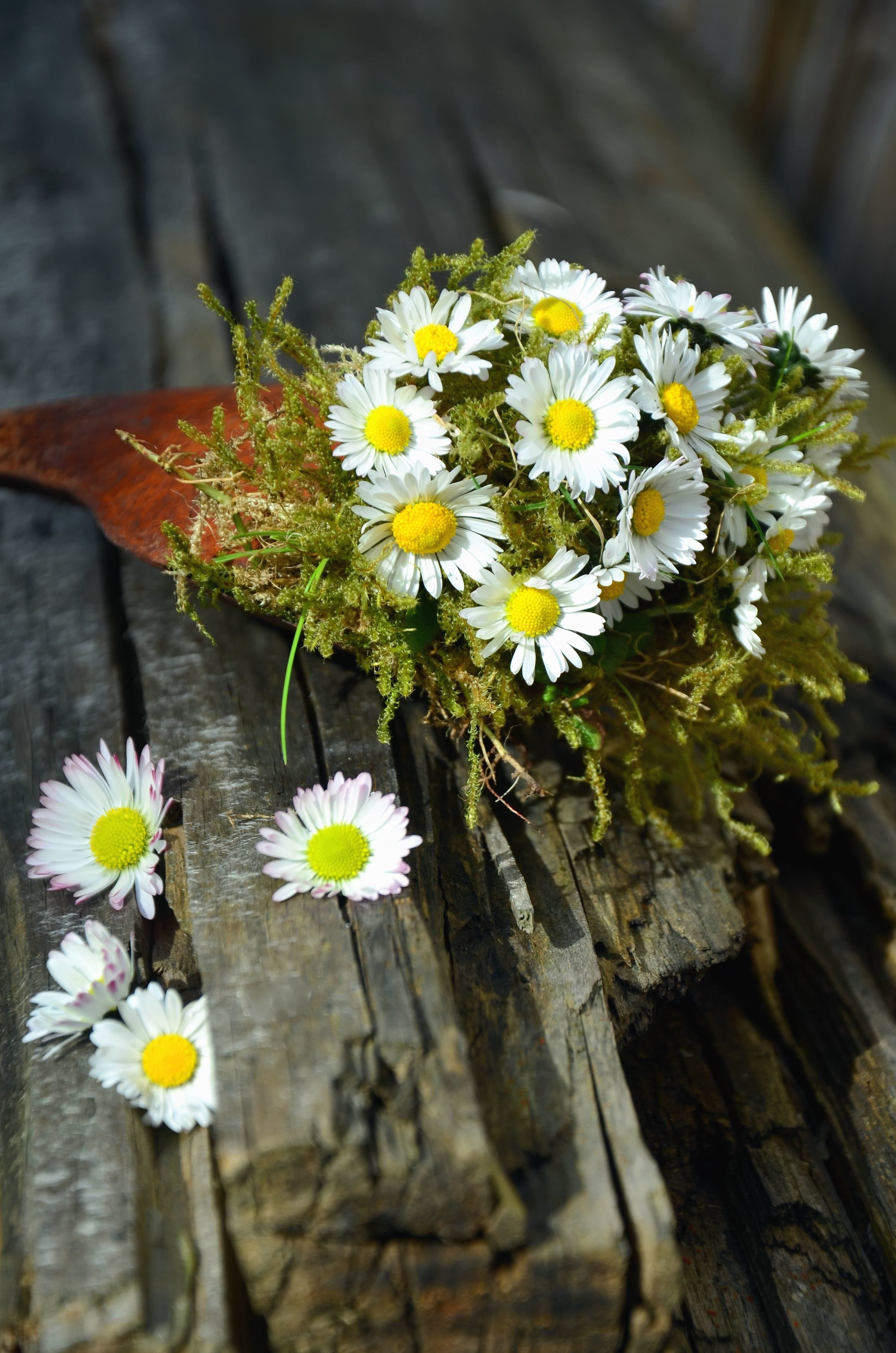 Free Picture Wood Bouquet Flower Petals Daisy