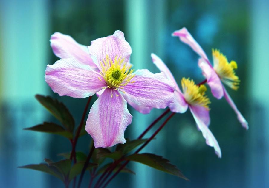 haulm, flower, petal, bloom, garden