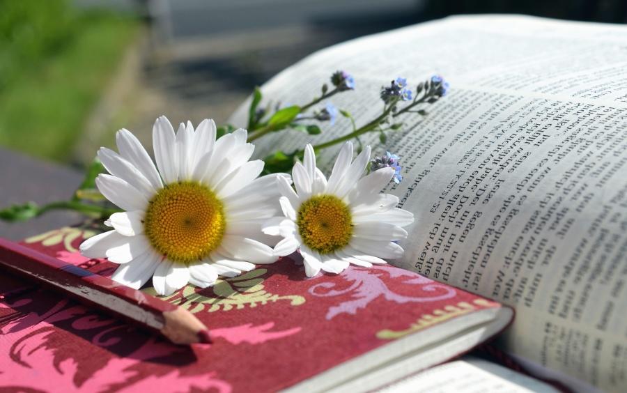 Marguerite, pétale, fleur, livre, page, apprentissage