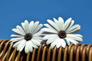 Fleur, pétale, fleur, pollen, pistil