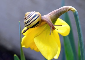 flower, flowering, snail, invertebrate, animals, nature