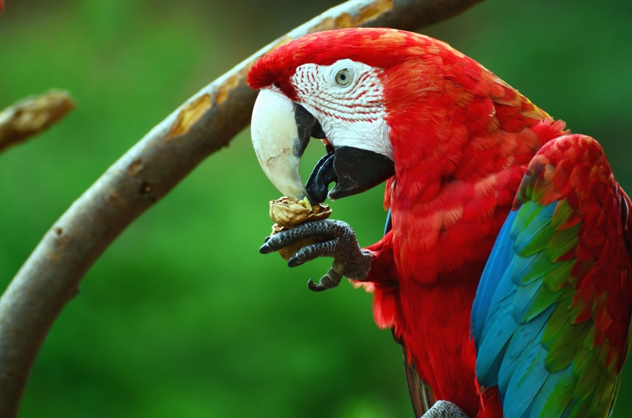 macaw parrot, beak, food, colors, colorful