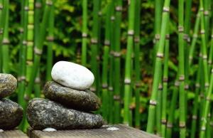 bamboo, stone, nature, plant