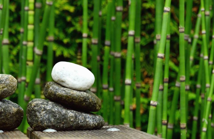Bambú, piedra, naturaleza, planta
