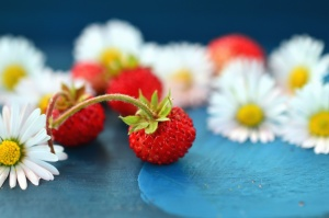 peduncle, raspberry, daisy, fruit, flower