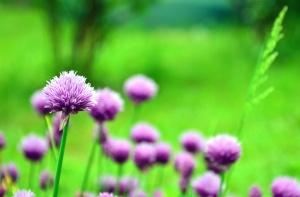 Blume, gras, feld, wiese, pflanze