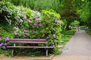 bench, lilac, shrub, tree, flower, park