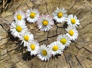 daisy, stump, tree, heart, flower, decoration