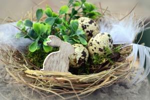 vajíčka, zajačik, hniezdo, veľkonočné, rastlina