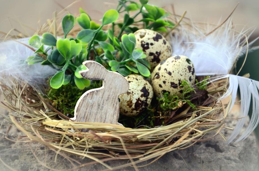 αυγό, λαγουδάκι, φωλιά, Πάσχα, φυτό