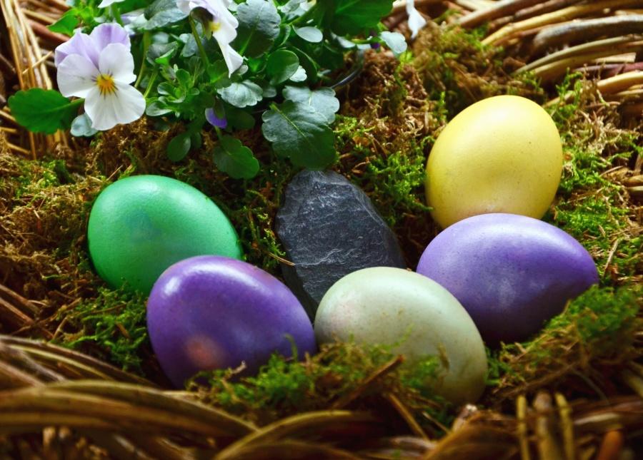 virág, a tojás, a húsvét, fészek, színes, színes