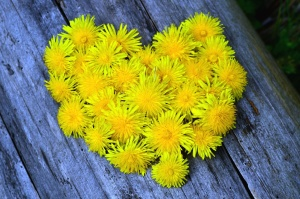 dandelion, tree, heart, decoration, flower