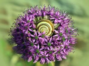 flower, plant, petal, snail, animal