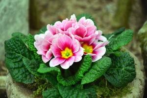 flower, petal, blossom, leaf, plant