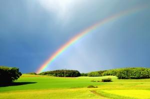 Pioggia, arcobaleno, prato, foresta, colorfull