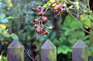 Perro rosa, planta, cerca, árbol, hoja