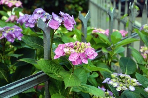 квітка, цвітіння, Пелюстка, аркуш, металу, огорожі саду