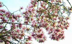 tree, flower, branch, flower, spring