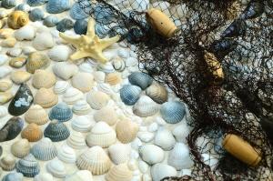 seashell, fishing net, sea, star, rock