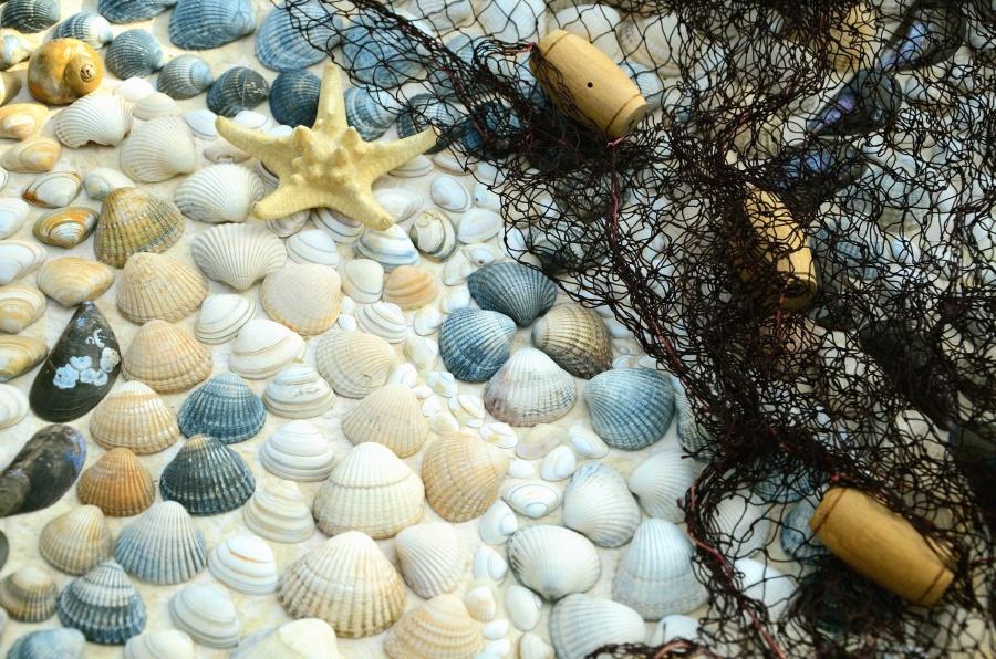 muslingeskal, fiskeri net, havet, stjerne, rock