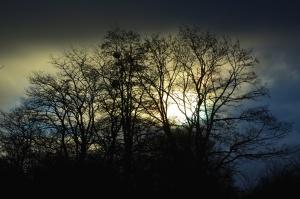 silhouette, forest, wood, branch, cloudy, Sun, dark