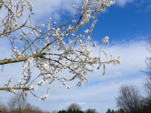 sky, spring, tree, branch, flowering