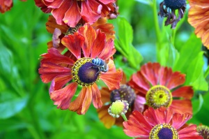 flower, bee, pollen, colorful, flowering, petal