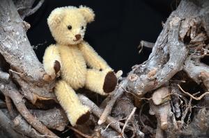 teddy bear, branch, toy, wood