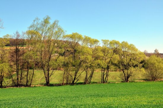 wood, grass, sun, mountain, sky
