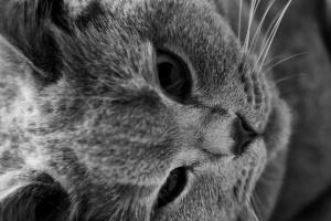 cat, black, white, kitten