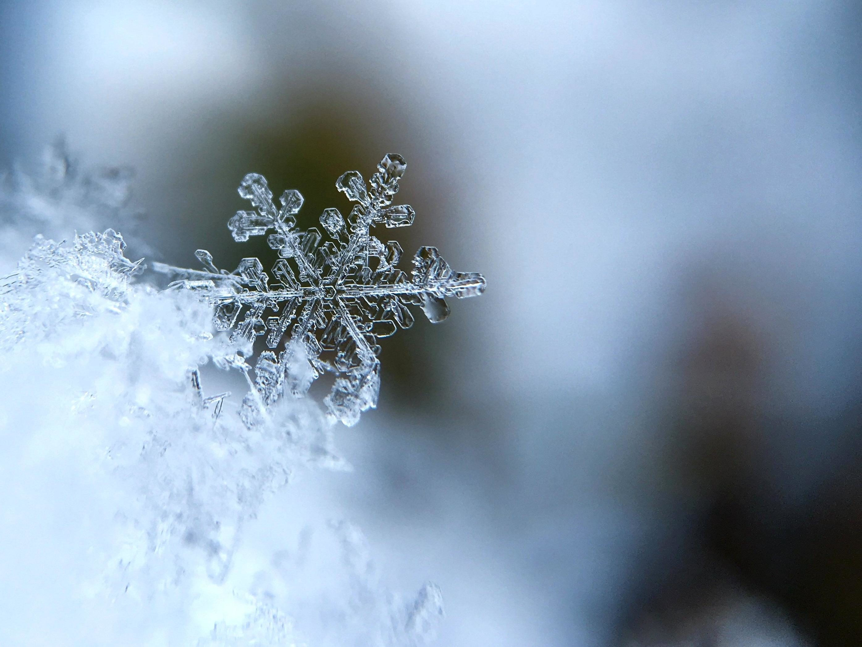 Free picture: snow, sn...