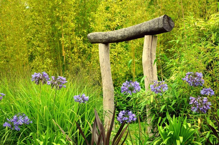 bunga, rumput, hutan alam, kayu