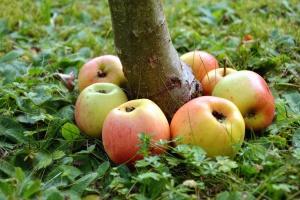 wood, apple, herb, fruit, nature