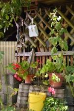 pot, flower, fence, wood, backyard