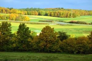 Wiese, Gras, Wald, Holz, Natur, Himmel
