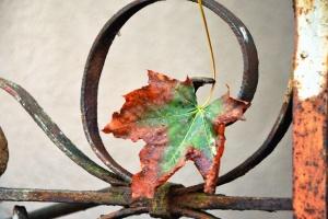 leaf, autumn, metal, fence, steel
