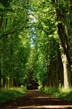 road, forest, wood, forest, nature