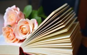 Boka, lära, kunskap, ros, kronblad, blomma