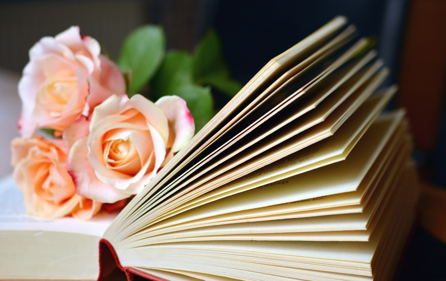 bok, lære, kunnskap, rose, kronblad, blomst