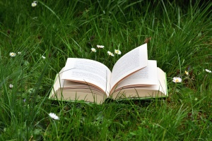 learning, book, grass, knowledge, daisy, nature, plant