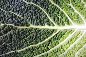 Blatt, Brokkoli, Lebensmittel, Pflanze