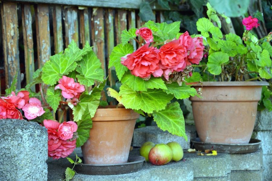 Pot de fleurs, fleur, feuille, pomme, pierre